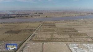 我市7万多亩水稻喜获丰收